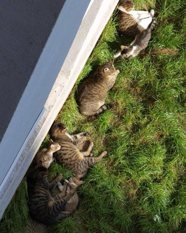 U dvorištu zgrade obitava hrpa uličnih mačaka, a nedavno se okotilo još nekoliko mačića. Kako mi je podrumsko spremište puno ostataka materijala od nekih ranijih projekata, odlučio sam im u dvorištu složiti primjereniji smještaj za nadolazeće hladne dane.