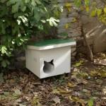 Mačinjak u dvorištu
